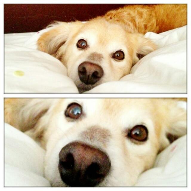 unfurgettables hond rouw