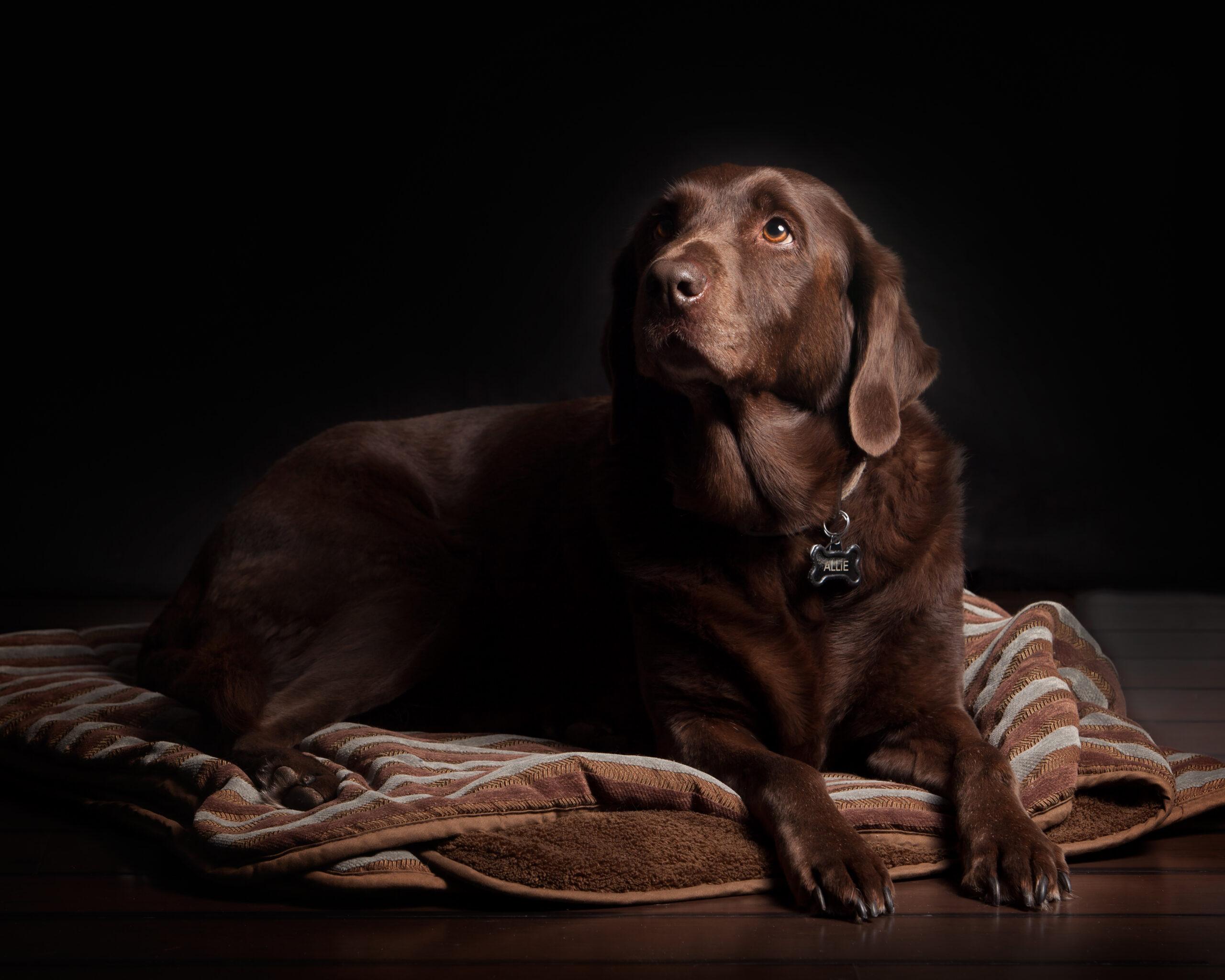 rouwende hond