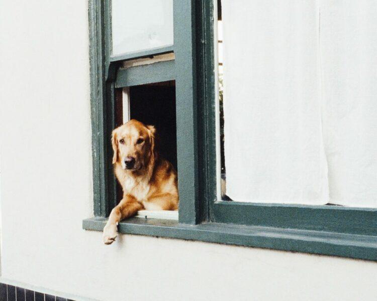 De praktische zaken rondom het verliezen van je hond – Deel 1: afscheid nemen