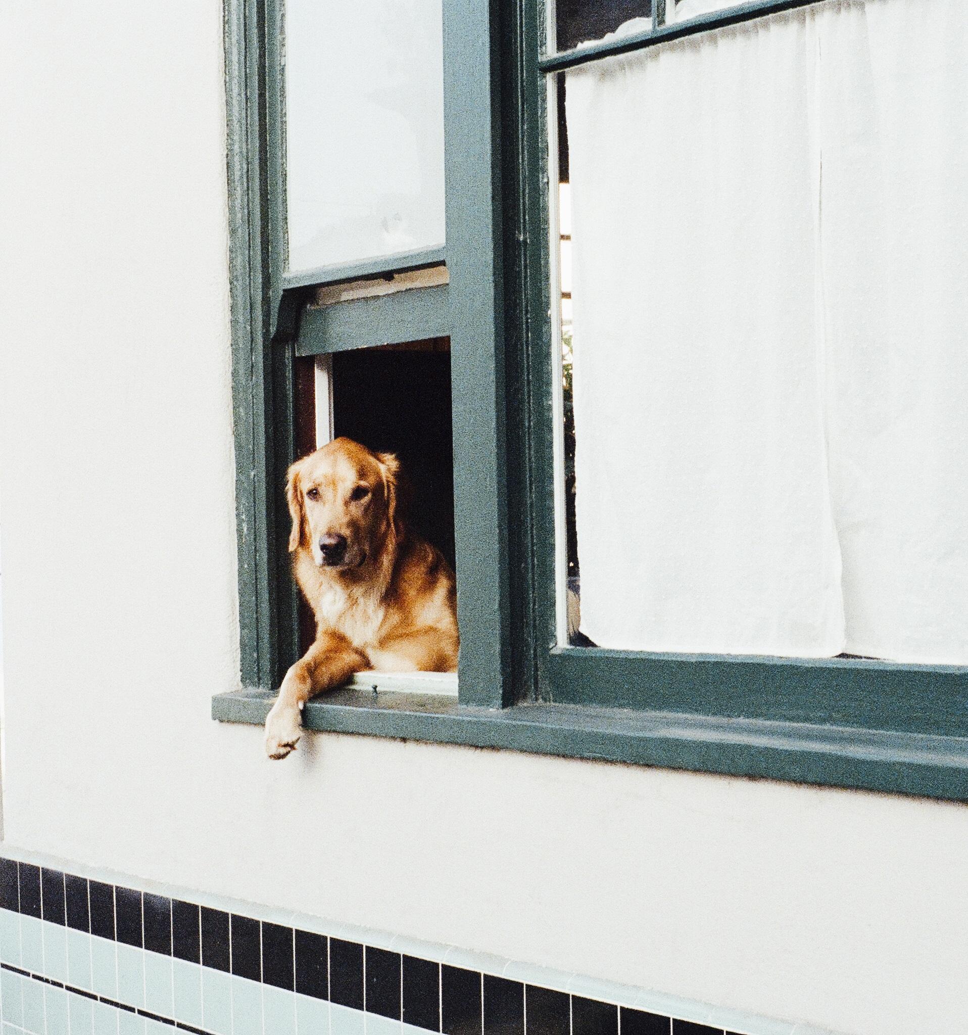praktische zaken overlijden hond