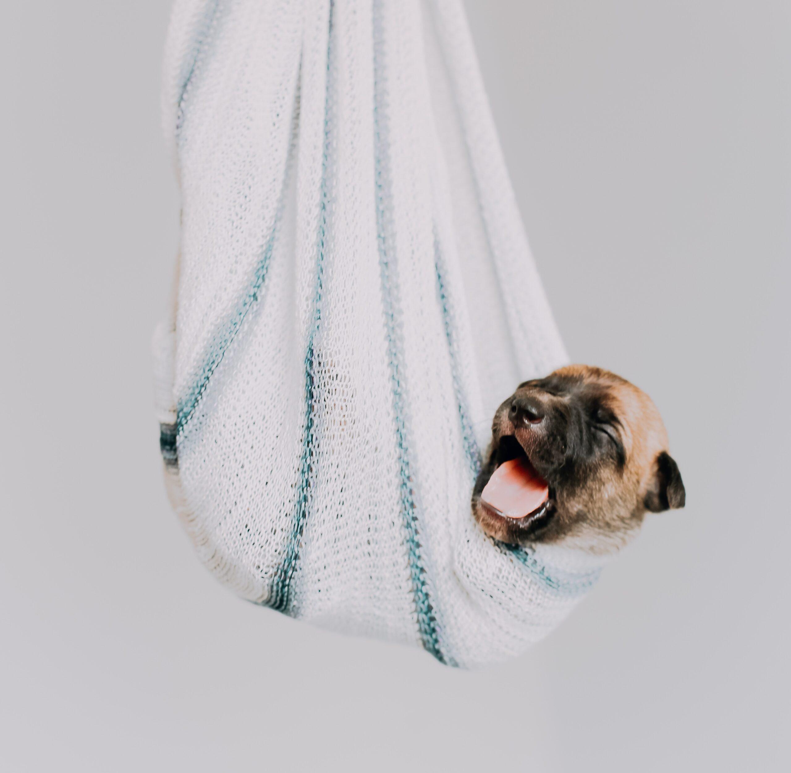 huisdier hond baasje hechting oxytocine