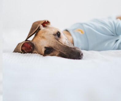 rouw hond mindfulness unfurgettables