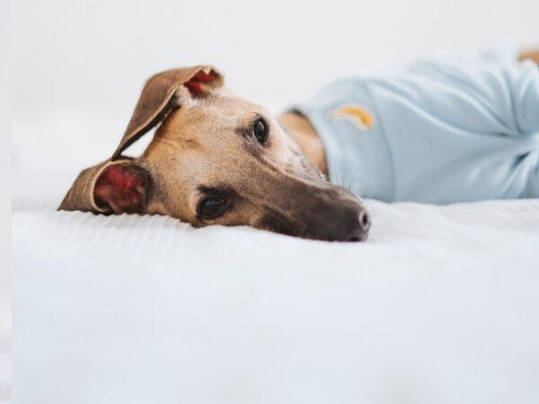 Dit is hoe mindfulness kan helpen bij rouw om je hond